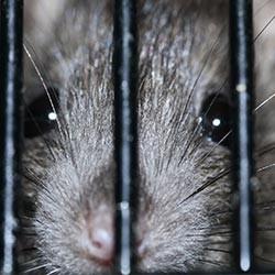 Atrappe Rats et Souris