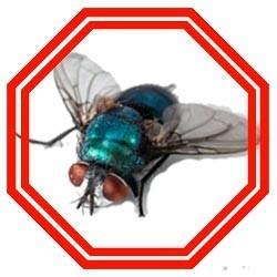 Lutter contre les mouches