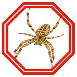 Lutter contre les araignées