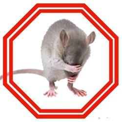 Comment se débarrasser des rats