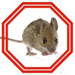 lutter contre les souris