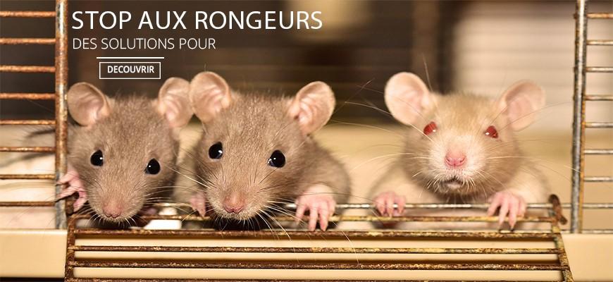 Stop aux rongeurs